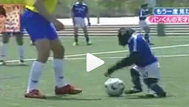 Video | Dieser Affe dribbelt besser als Lionel Messi, CR7 und Co.!