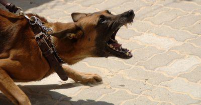 Er verfütterte seine Freundin an seine Hunde und kehrt jetzt als Profi zurück!